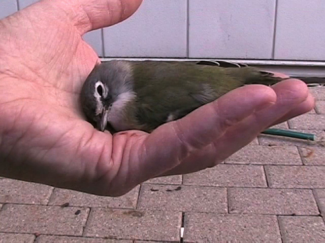 FLAP- bird-my hand
